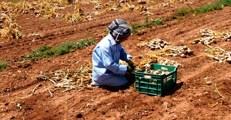 Las campañas agrícolas necesitan coordinación entre administraciones y propuestas de futuro