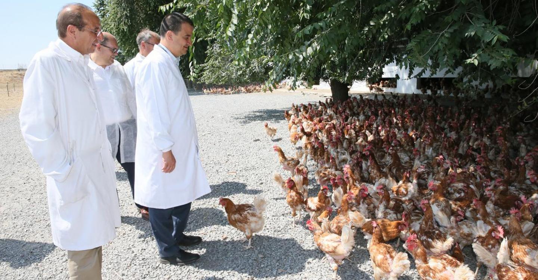 El Gobierno de Castilla-La Mancha apadrinará la fusión el 19 de julio de las dos asociaciones de avicultura de puesta existentes en la región