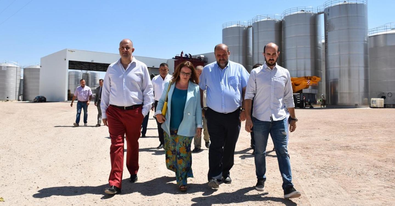 El Gobierno de Castilla-La Mancha espera resolver en septiembre la convocatoria de ayudas de reestructuración del viñedo