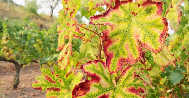 Abierto el plazo de inscripción para VinoDiversidad, dedicado a biodiversidad y cambio climático en el viñedo