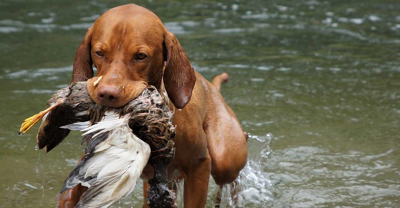 ACEM en contra de ampliar el periodo de caza