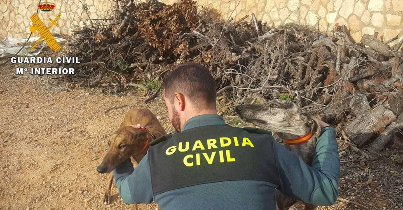 La Guardia Civil de Albacete detiene a nueve personas por caza furtiva con galgos en varios cotos de caza de la provincia