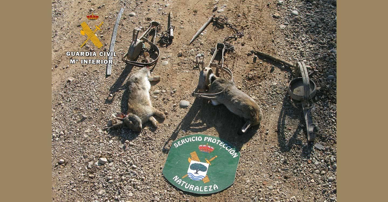 La Guardia Civil interviene métodos de caza no selectivos para la captura de pequeños mamíferos