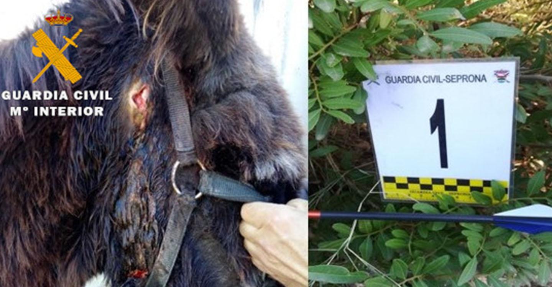 La Guardia Civil investiga a un menor de edad como presunto autor de delito de maltrato animal