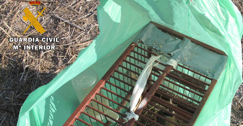 La Guardia Civil de Albacete  investiga a dos personas por la captura de aves protegidas mediante el uso de liga
