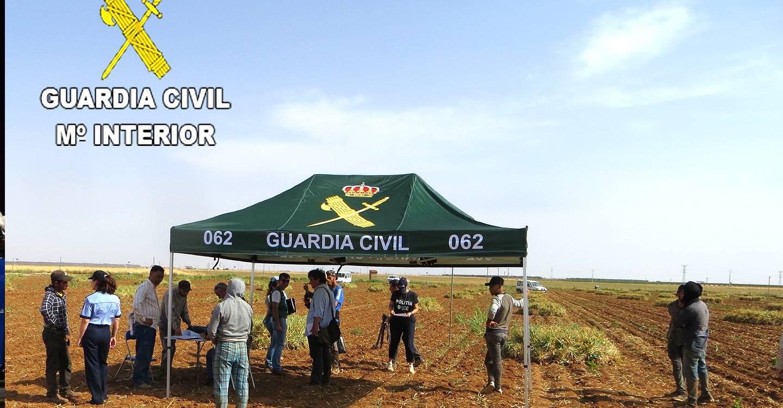 La Guardia Civil y la Inspección de Trabajo y Seguridad Social junto con la Policía y la Inspección de Trabajo de Rumania han llevado a cabo varias jornadas en las que se han intensificado las inspecciones para conocer la situación de los trabajadores en la campaña de recolección del ajo en Albacete.