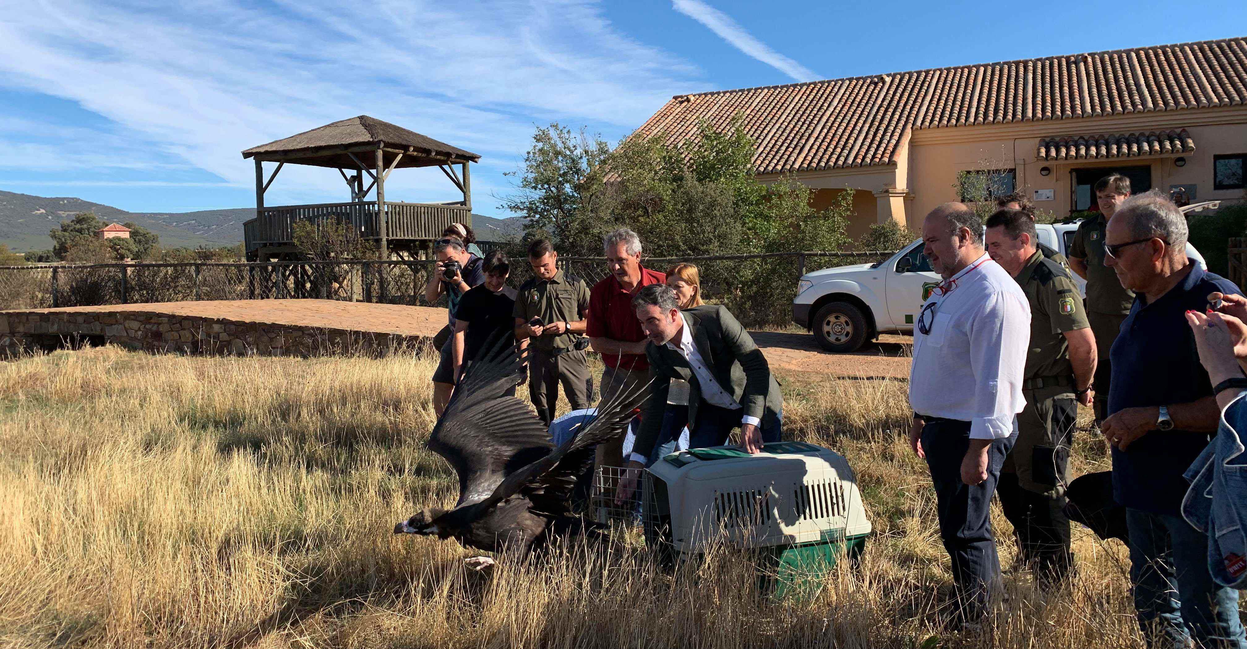 El Gobierno de Castilla-La Mancha respalda la preservación de aves en peligro en la región