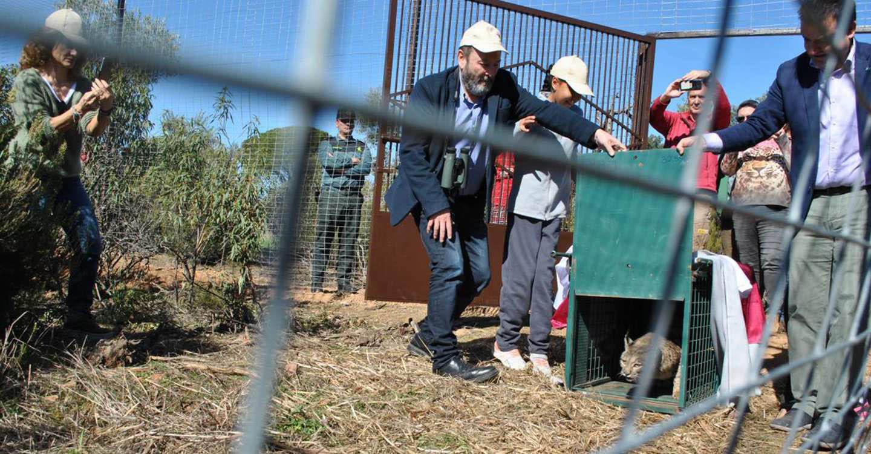 El lince ibérico regresa a Cabañeros 50 años después