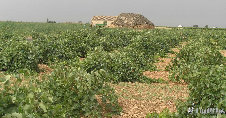 Más de 27.700 agricultores y ganaderos de Ciudad Real reciben 96 millones de euros del anticipo del pago de la PAC
