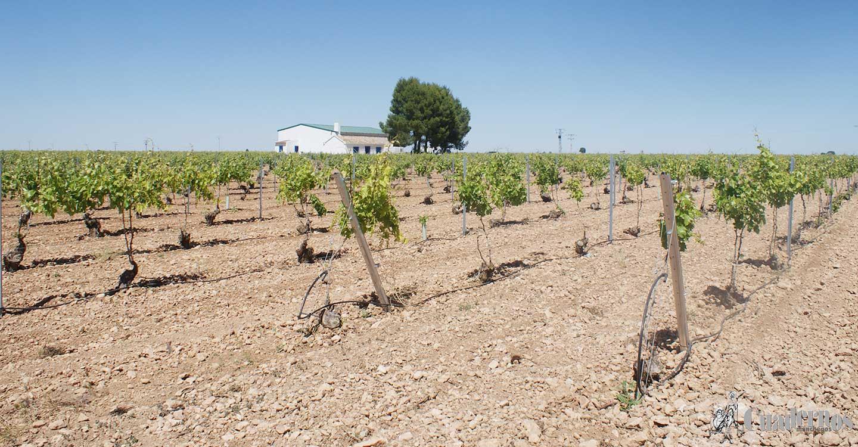 Acuerdo en el seno de la Junta Directiva de la Denominación de Origen Valdepeñas, la más antigua en vino de Castilla-La Mancha