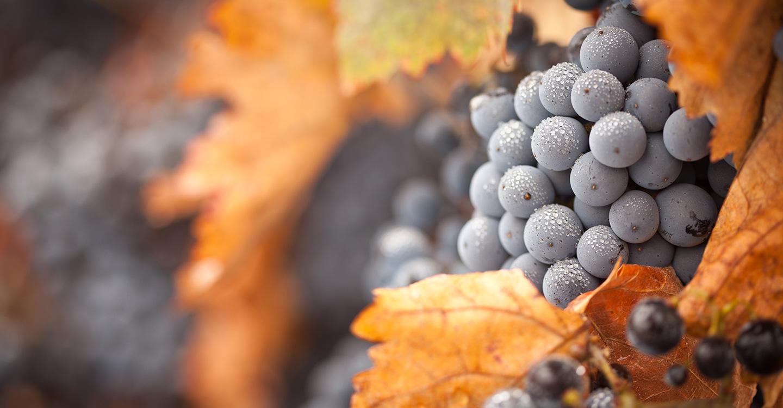 Aprobada la ampliación del rendimiento del viñedo en la DO Valdepeñas.
