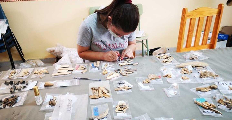 Finaliza la campaña de investigación zooarqueológica en Castillejo del Bonete, el yacimiento prehistórico de Terrinches