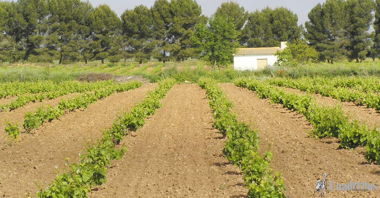 ASAJA Ciudad Real insiste en la necesidad de fondos y medidas extraordinarias para la recuperación del sector vitivinícola