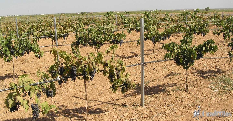 ASAJA Ciudad Real valora el mantenimiento del Régimen de Módulos para el sector agrario en 2021 en la declaración de la Renta