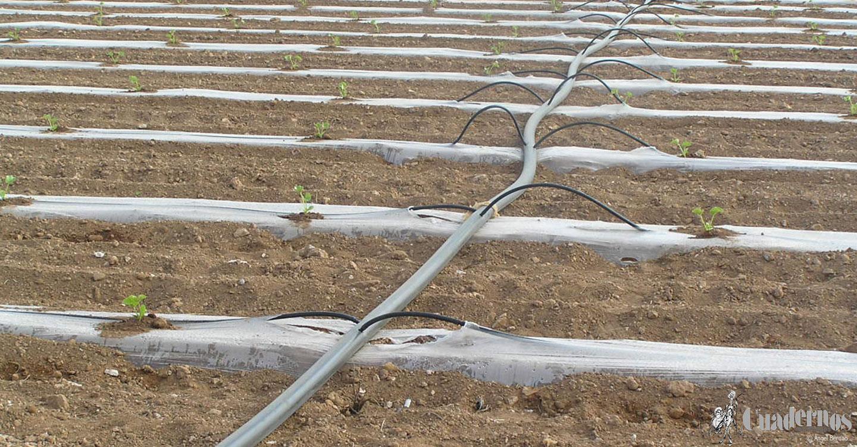 ASAJA Ciudad Real se opone rotundamente a nuevos recortes de agua para los regantes del Alto Guadiana