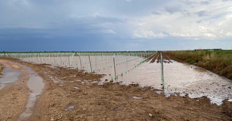 ASAJA visita los daños en Socuéllamos tras la tormenta de agua y granizo que ha golpeado el viñedo de la localidad