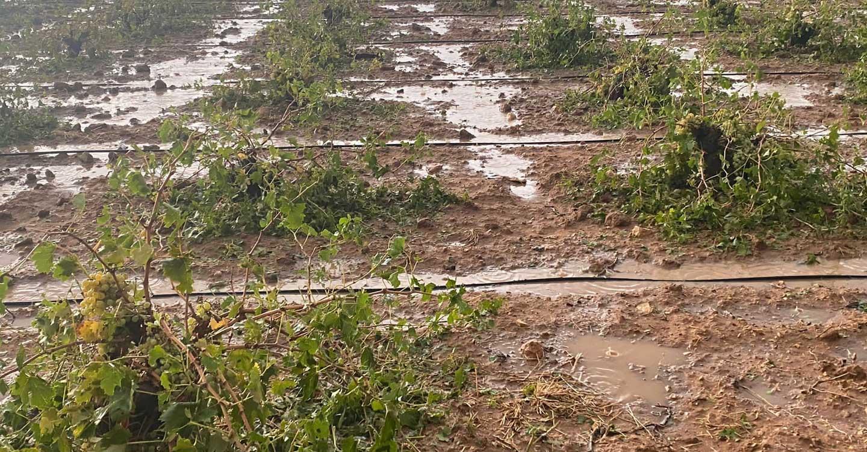 ASAJA en Campo de Criptana solicita una rebaja sustancial del IBI rústico para los viticultores afectados por el temporal
