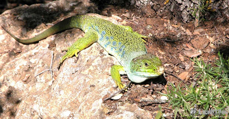 Descubra el Parque Natural de Las Lagunas de Ruidera: