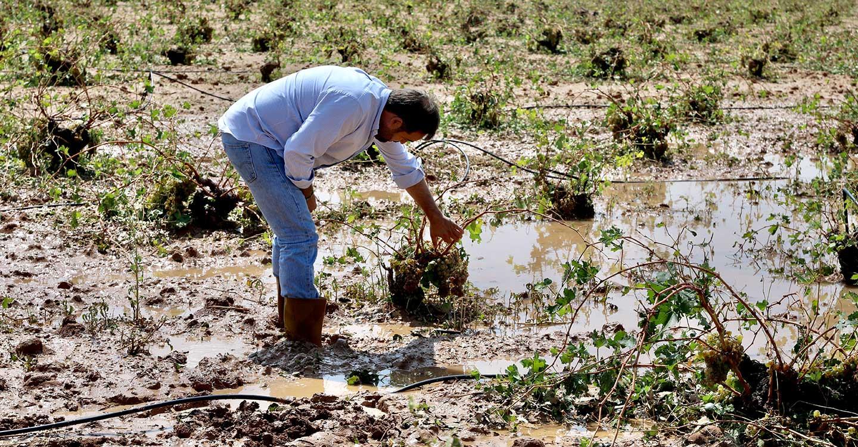 Núñez exige a Page que de manera urgente ponga encima de la mesa el dinero necesario para ayudar a agricultores y familias afectadas por la tromba de agua y granizo