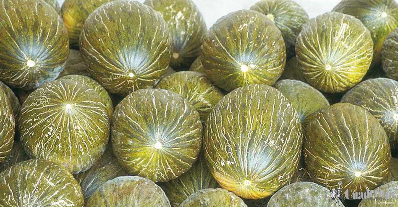 La Interprofesional pide a los productores de melón y sandía no bajar la guardia en la planificación