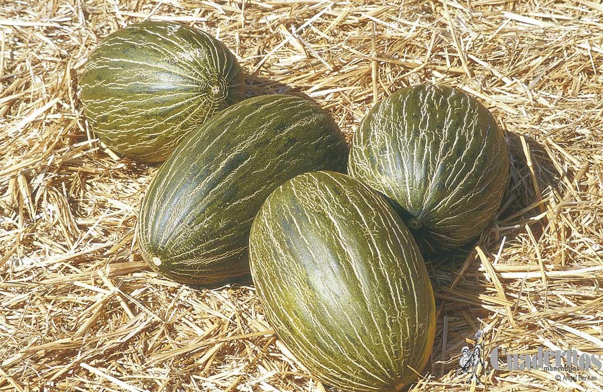 La Interprofesional de melón y sandía se suma a la campaña de apoyo a los regantes del Alto Guadiana