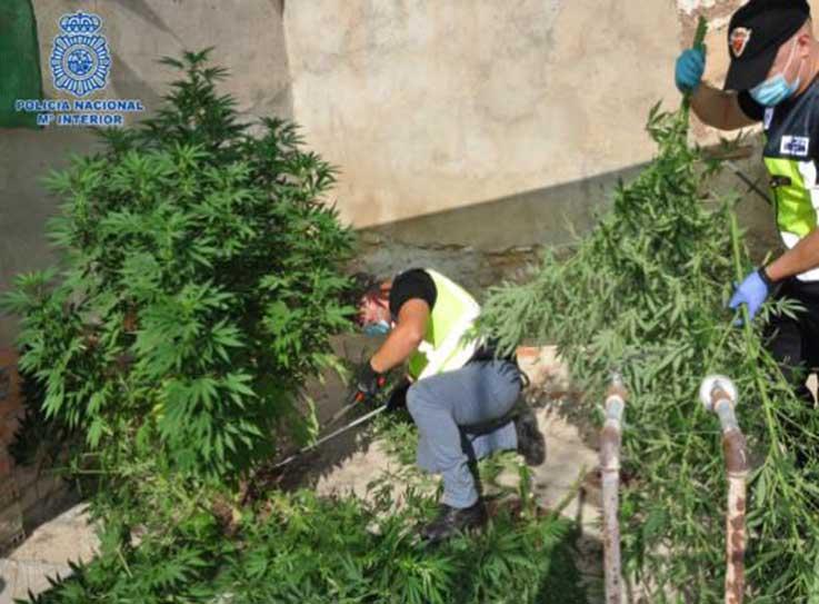 """La Policía Nacional detiene a un clan familiar dedicado al cultivo """"indoor"""" de marihuana en Puertollano (Ciudad Real)"""