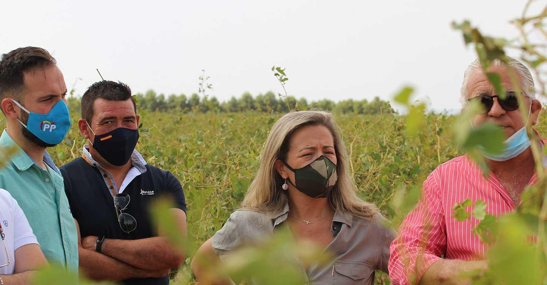 Merino pide a Page que no abandone a su suerte a los agricultores tras una visita a una explotación agraria de Socuéllamos