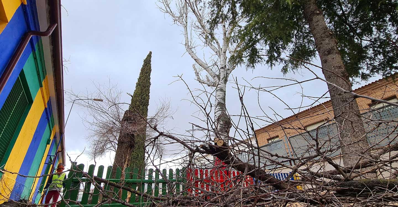 La poda en altura y en los centros educativos centran los primeros trabajos del área municipal de Parques y Jardines
