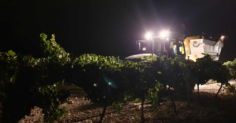 Preocupación entre los agricultores de El Progreso por los precios de la uva que se están viendo en la provincia