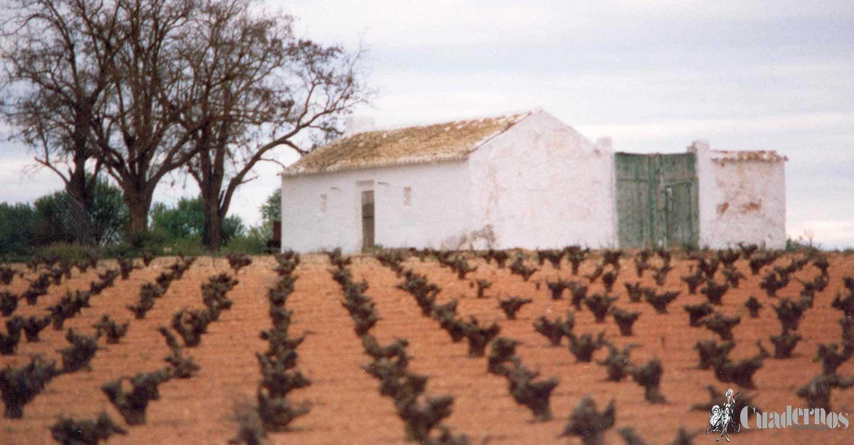 El Sector Agrario de Pedro Muñoz (I)