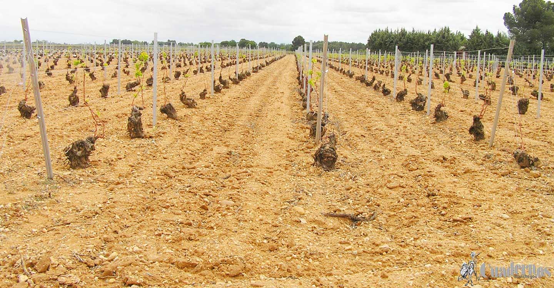 El Sector Agrario de Pedro Muñoz (II)