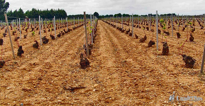 El Sector Agrario de Pedro Muñoz (VI)