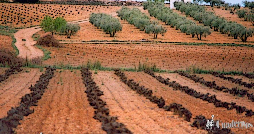 El Sector Agrario de Pedro Muñoz (VII)