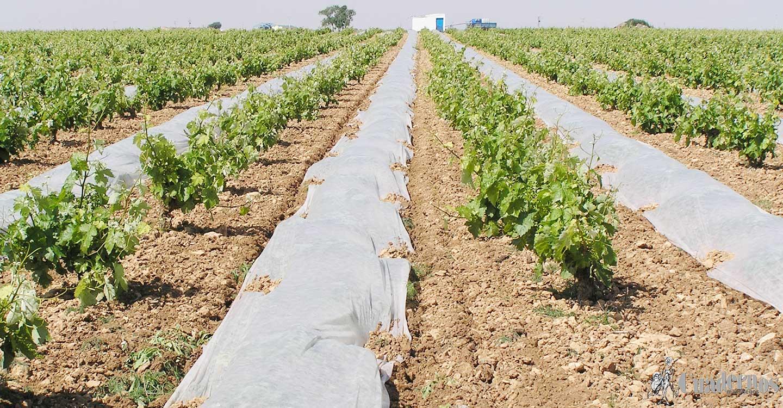 Piden que sector agrario, ganadero y agroalimentario sea debidamente reconocido y protegido