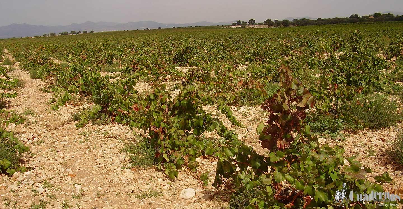 El sector del vino en Ciudad Real necesitará presupuesto para poner en marcha un nuevo proceso de destilación de crisis
