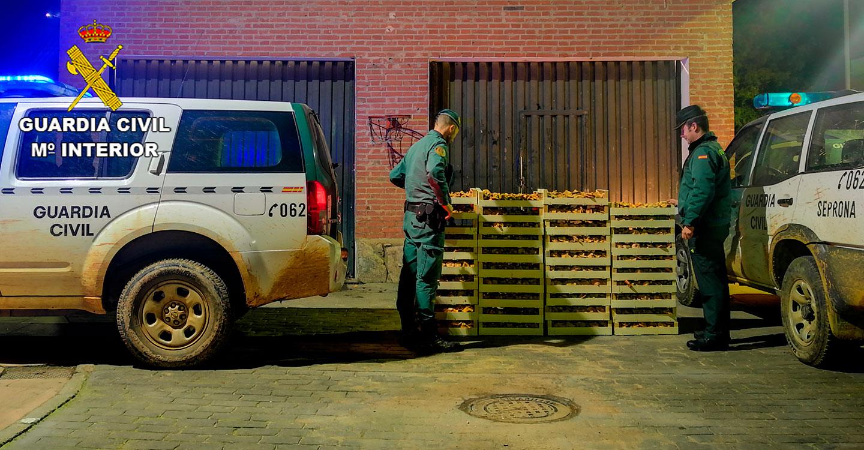 La Guardia Civil incauta más de una tonelada de níscalos en el final de la campaña micológica