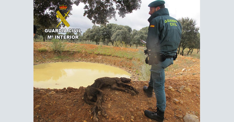 El SEPRONA investiga un delito de maltrato animal en El Casar