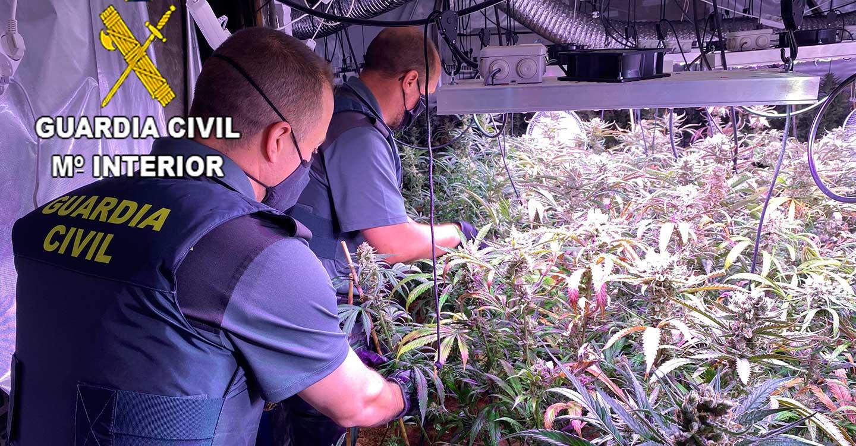 """La Guardia Civil desmantela una plantación de marihuana """"indoor"""" en la urbanización Parque de Las Castillas"""