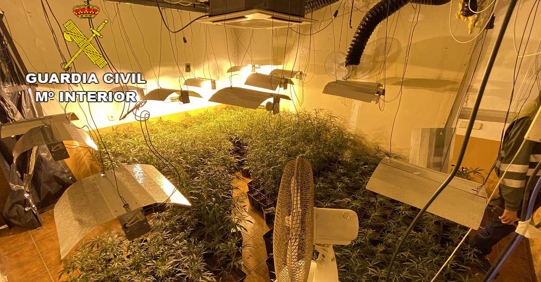 La Guardia Civil de Guadalajara desmantela una plantación de marihuana en Jadraque