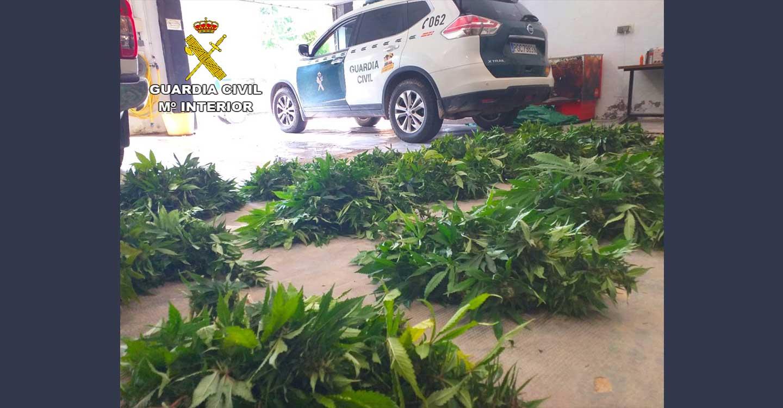 La Guardia Civil de Guadalajara detiene a una persona por tráfico de drogas en Albalate de Zorita