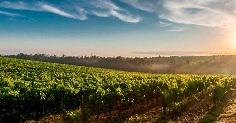 El Gobierno aprueba medidas extraordinarias por 90 millones de euros para paliar los efectos de COVID-19 en el sector vitivinícola