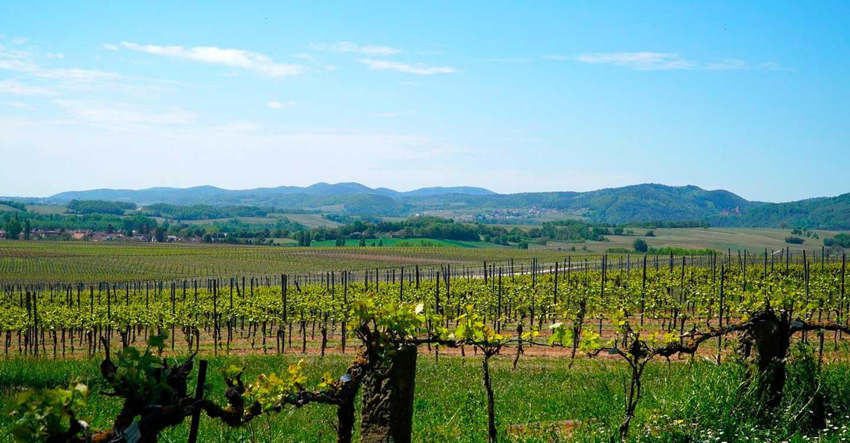 Unión de Uniones estima que la dotación del paquete vino COVID19 es insuficiente para atender las demandas de ayudas