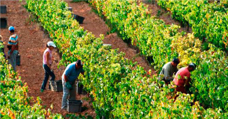 El Gobierno aprueba la prórroga de las medidas urgentes para la contratación temporal de trabajadores en el sector agrario