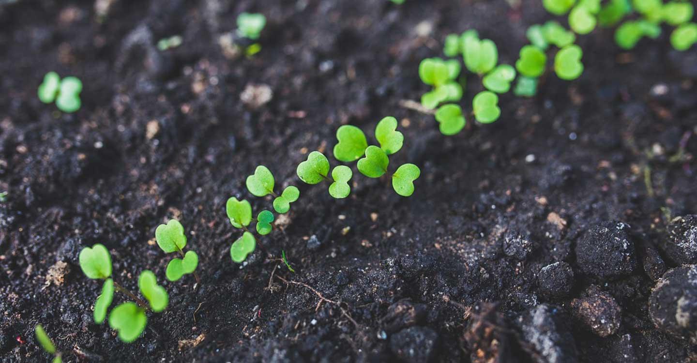 Unión de Uniones demanda facilitar a los agricultores la comercialización del material heterogéneo ecológico