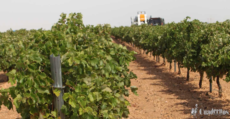 Unión de Uniones critica el paso atrás del ministro de Agricultura en su última propuesta de definición de agricultor activo