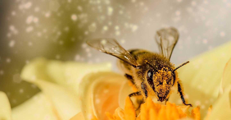 Unión de Uniones estima una cosecha de miel un 50% inferior a la de otros años