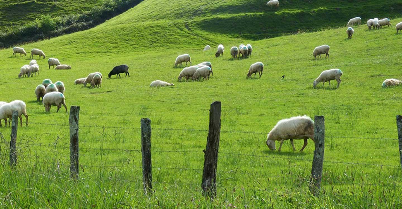 """Unión de Uniones rechaza el """"impuesto"""" a los productores de ovino y caprino propuesto por INTEROVIC"""