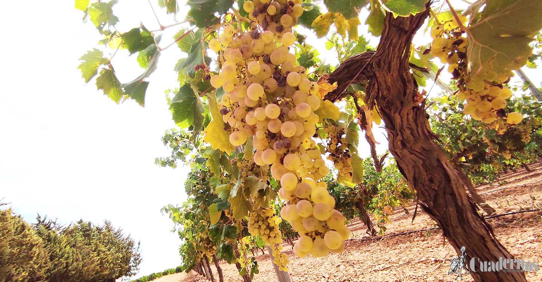 Los viticultores reclaman que no se fijen precios de la uva por debajo de los costes de producción