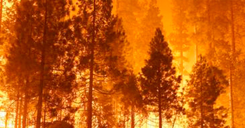 IU C-LM reclama un operativo anual de prevención y extinción de incendios público