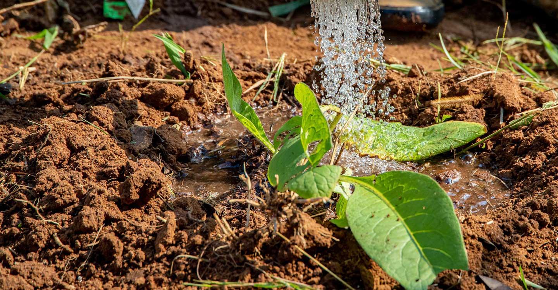 ASAJA CLM define su posición para defender una agricultura productiva en la región